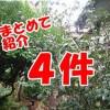 雑草対策!庭のリフォームで手入れと防犯対策を解決 in練馬区